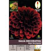 Bulbo Dalia Decorativa Rojo terciopelo 1ud
