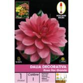 Bolbo Dalia decorativa rosa, flor grande, 1 ud