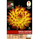 Bolbo Dalia cactus amarela com pontas vermelhas, 1 ud
