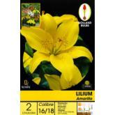 Bolbo Lilium amarelo 2 ud
