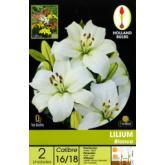 Bolbo Lilium Branco 2 ud