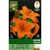 Bolbo Lilium laranja 2 ud