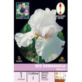 Bulbo Iris Germánica Blanco 1ud