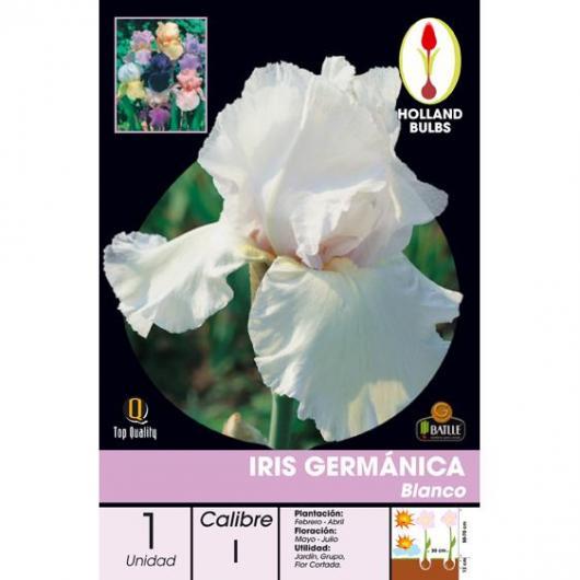 Bulbe d'iris germanique blanche 1 pièce