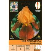 Bolbo Iris germânica vermelho-laranja, 1 ud