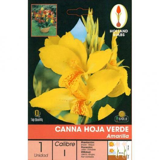 Bulbo Canna Amarilla Hoja Verde 1ud