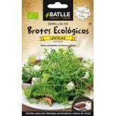 Sementes germinadas lentilhas Eco