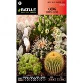 Semillas de  Cactus Plantas Crasas variadas