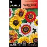 Graines de chrysanthème tricolore varié