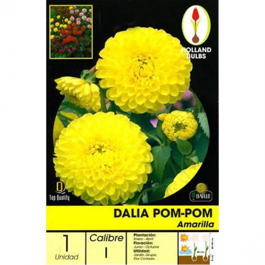 Bulbe dahlia pompon jaune, 1 pc