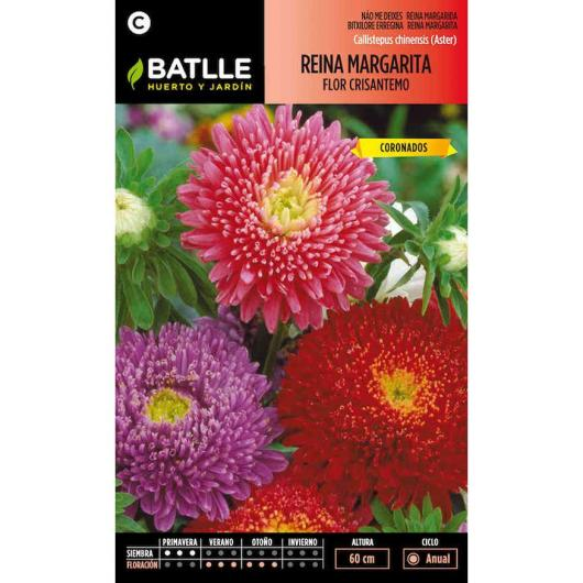 Semillas de  Reina Margarita flor crisantemo
