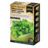 Kit salada baby leaves folhas verdes