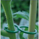 Tomatoclips 25ud