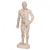Corpo humano caucho Zen Long, 26 cm
