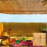Bambou chinois Reedcane