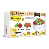Seed Box Mini Horta