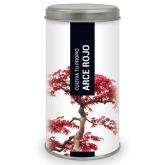 Coltiva il tuo proprio bonsai Acero Rosso