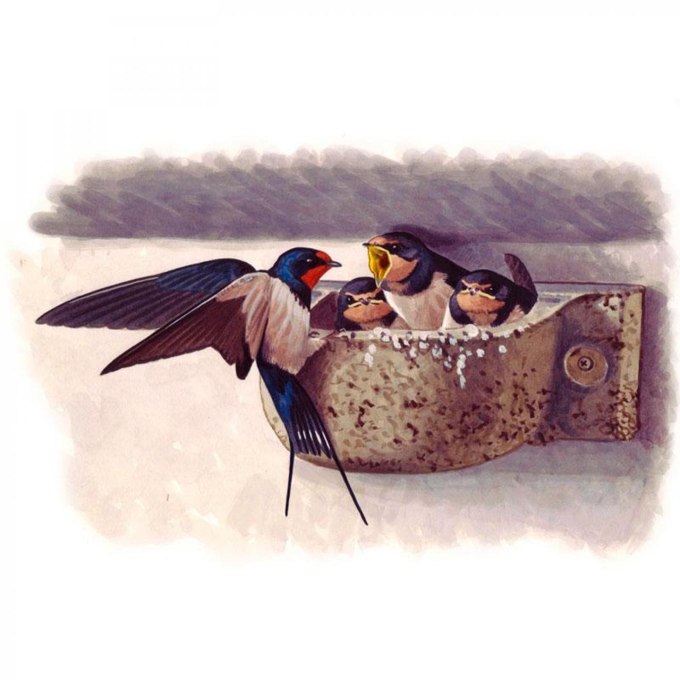 Caja nido Schwegler cazoleta para golondrina