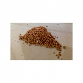 Sementes planta carnívora mix Sarracenia