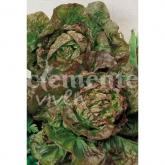 Sementes biológicas de Alface Maravilha 4 Estações