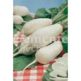 Semi ecologici di rapa bianca