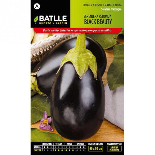 Graines d'aubergine ronde noire