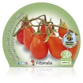 Muda biológica de Tomate Red Pear Cherry, vaso 10,5 cm de diâmetro