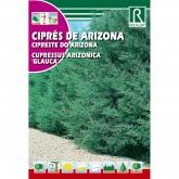 Sementes de Cipreste do Arizona - cipreses arizonica