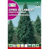 Sementes de Cipreste-da-Califórnia Cupressus macrocarpa