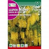 Sementes de Laburno-dos-alpes Laburnum anagyroides