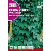 Sementes de parra virgem Parthenocissus tricuspidat