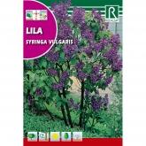 Sementes Lilás Syringa vulgaris