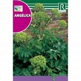 Sementes de Angélica