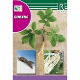 Sementes de Ginseng