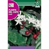 Sementes de Planta de Café
