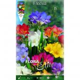 Bulbo Freesia semplice colori vari Elite 10u