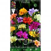 Bulbo Fresia (Freesia) doppia colori vari Elite 10u