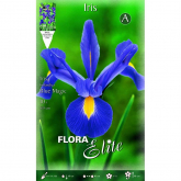 Bulbo Iris Olandese azzurro Elite 10u