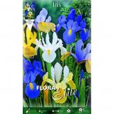 Bulbo Iris Olandese colori vari Elite 10u