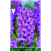 Bulbo Hyacinthus orientalis lilla Elite 3u