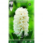 Bulbo Hyacinthus orientalis bianco Elite 3u