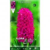 Bulbo Hyacinthus orientalis fuxia Elite 3u