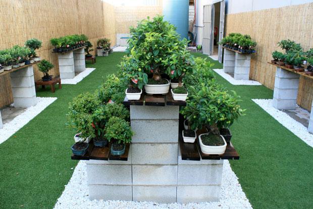 jardín de bonsáis