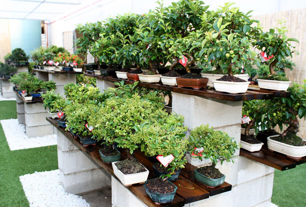 bonsáis tienda