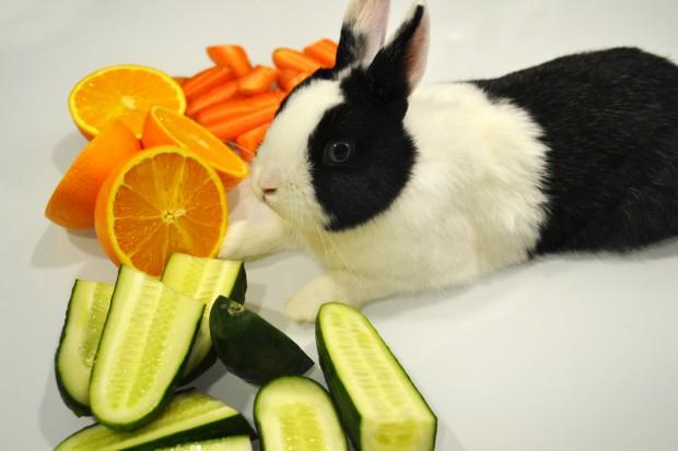 Alimentación completa para los conejos