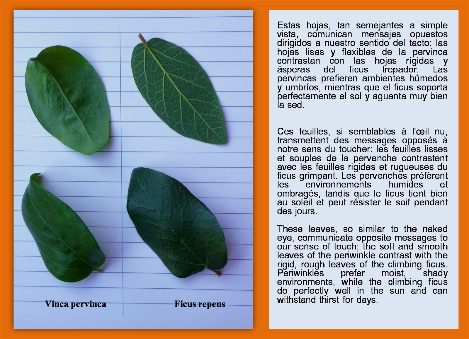 El lenguaje de las hojas
