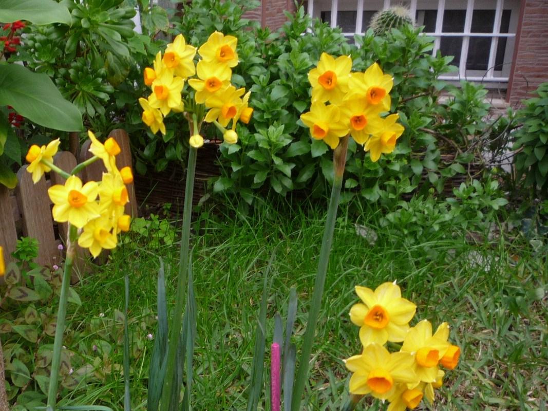 Flores de El Jardinero Tranquilo