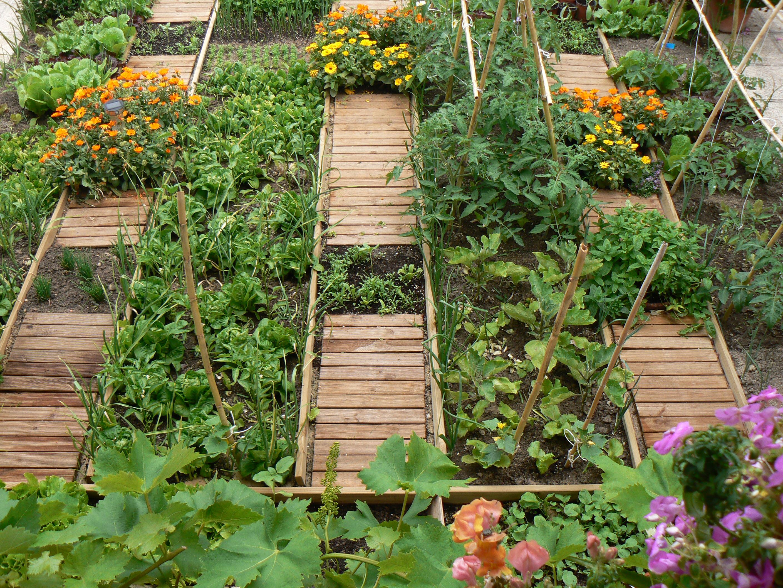 Todo lo que necesitas saber sobre sustratos para tu huerto for Que plantas se siembran en un huerto