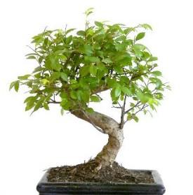 Herramientas para el cuidado del bons i - Cuidado del bonsai ...