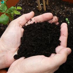 compost listo